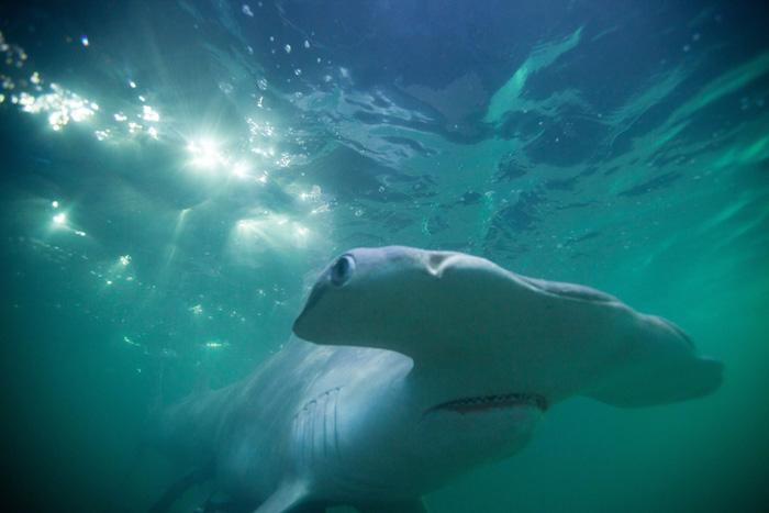 Кадры из фильма смотреть онлайн в хорошем качестве фильм про акул